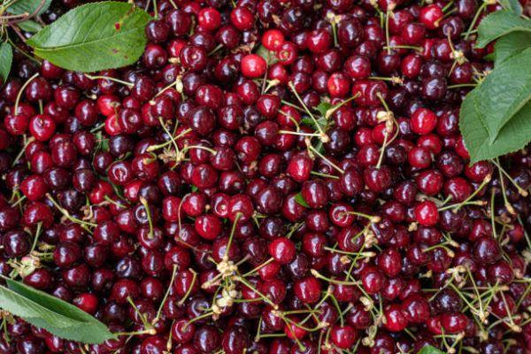 Que frutas y verduras comer en junio calendario de temporada junio cerezas