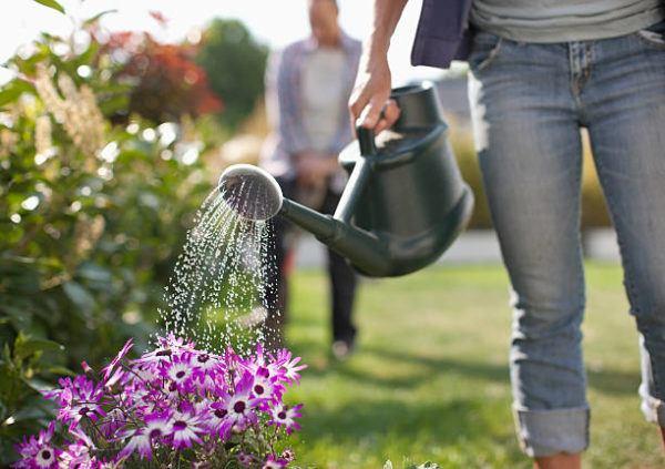 Como puedo desarrollar la resilencia en mi jardin trucos y consejos 1