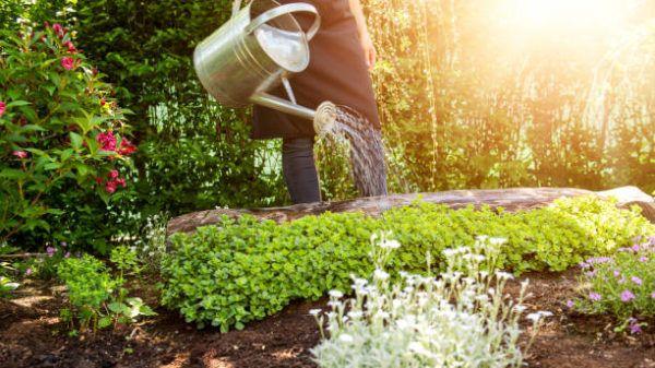 Como puedo desarrollar la resilencia en mi jardin trucos y consejos 10