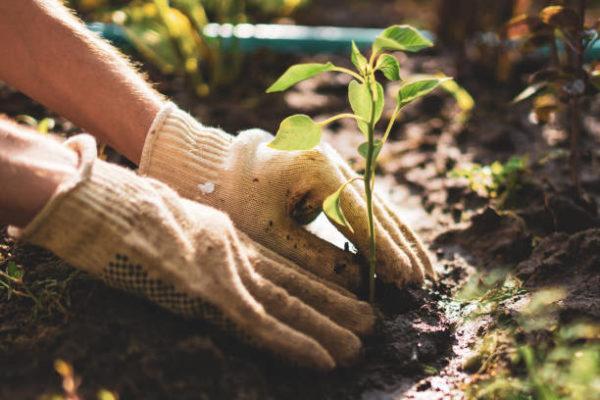 Como puedo desarrollar la resilencia en mi jardin trucos y consejos 2