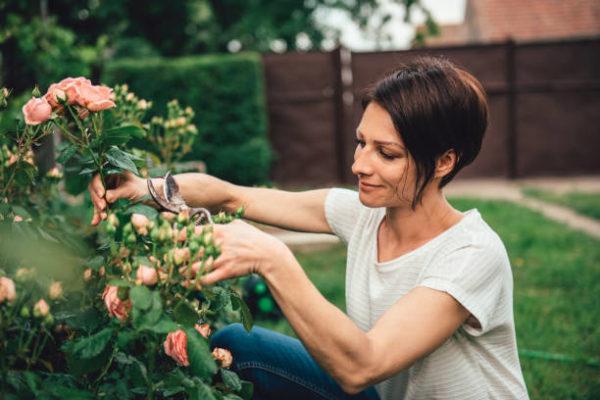 Como puedo desarrollar la resilencia en mi jardin trucos y consejos 4