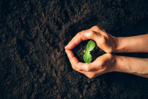 Como puedo desarrollar la resilencia en mi jardin trucos y consejos 5