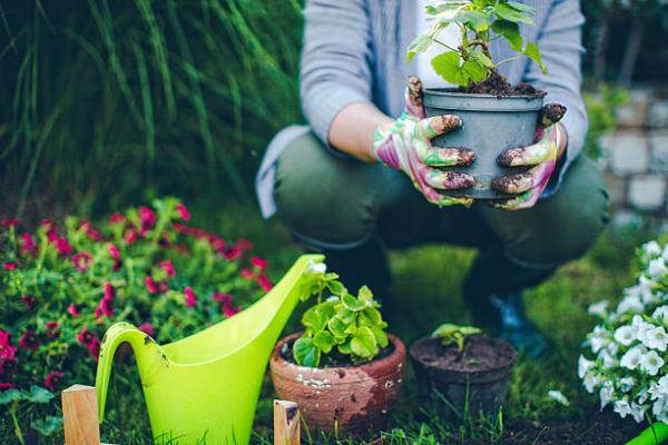Como puedo desarrollar la resilencia en mi jardin trucos y consejos 6