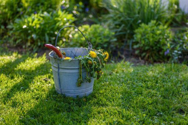 Como puedo desarrollar la resilencia en mi jardin trucos y consejos 9
