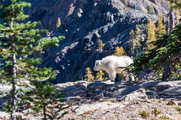 Tundra: Qué es, características, clima, tipos, fauna y flora animales