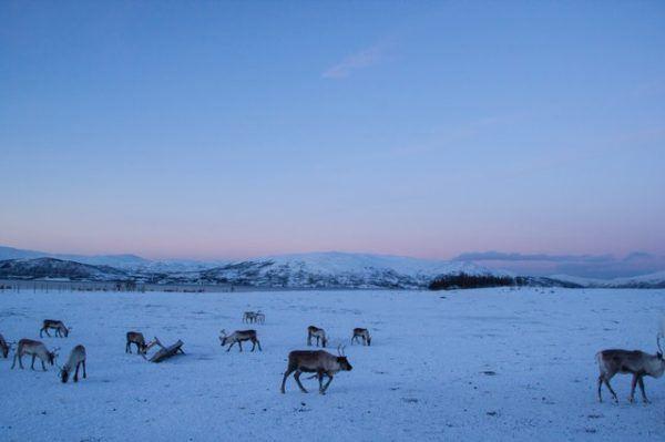 Tundra: Qué es, características, clima, tipos, fauna y flora animales sobre hielo