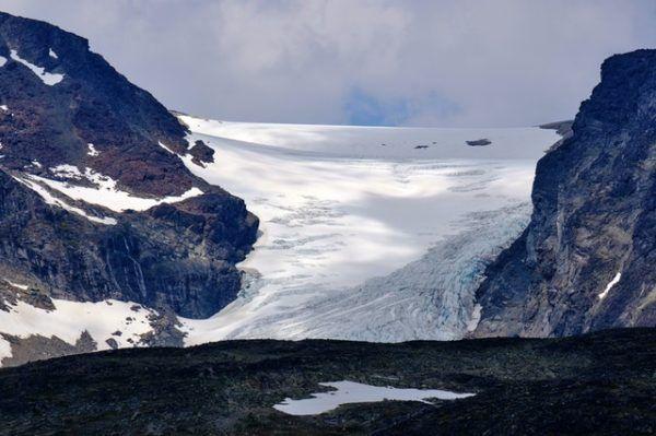Tundra: Qué es, características, clima, tipos, fauna y flora nieve y hielo