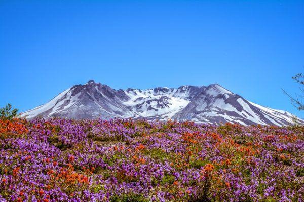 Tundra: Qué es, características, clima, tipos, fauna y flora floración