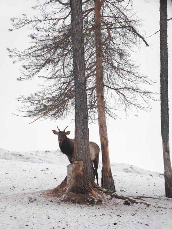 Tundra: Qué es, características, clima, tipos, fauna y flora temperatura