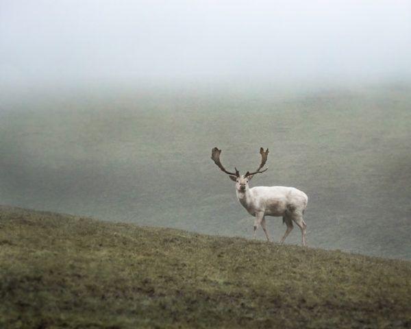 Tundra: Qué es, características, clima, tipos, fauna y flora reno