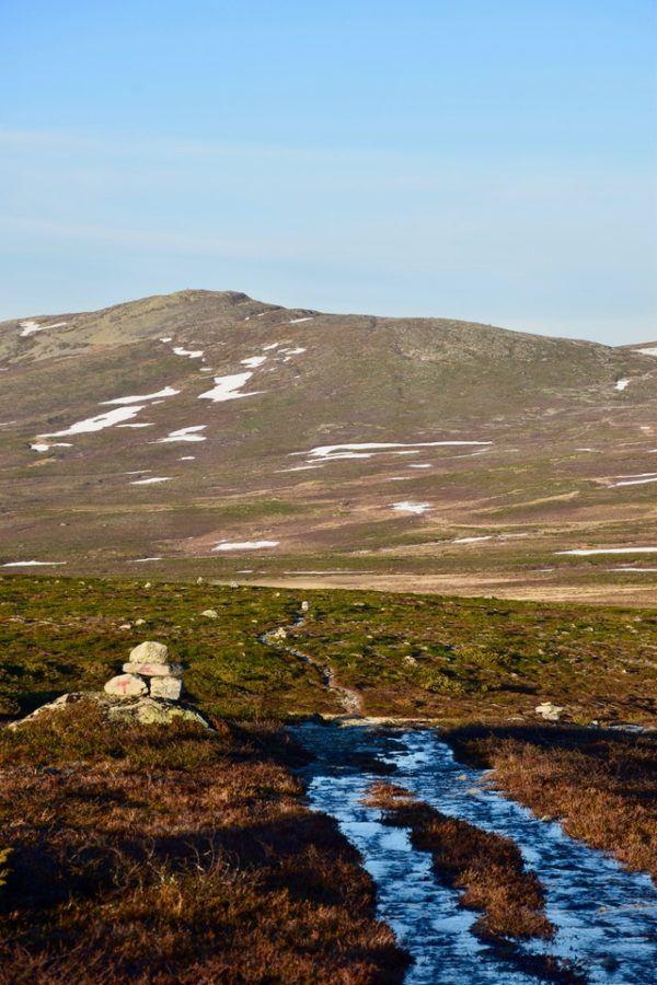 Tundra: Qué es, características, clima, tipos, fauna y flora verano
