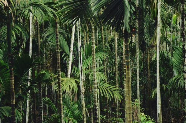 ¿Cuáles son las diferencias entre la selva y el bosque? Selva
