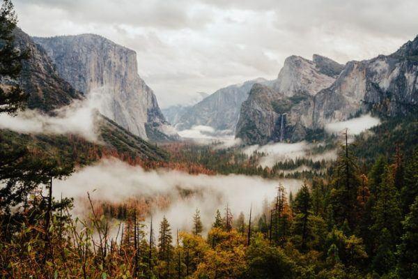 ¿Cuáles son las diferencias entre la selva y el bosque? Bosque