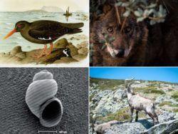 Cuáles son los animales que se han extinguido por culpa del hombre en España