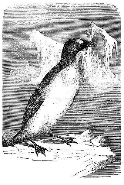 Cuales son los animales que se han extinguido por culpa del hombre en espana alcas gigantes