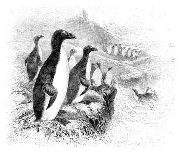 Cuales son los animales que se han extinguido por culpa del hombre en espana alcas