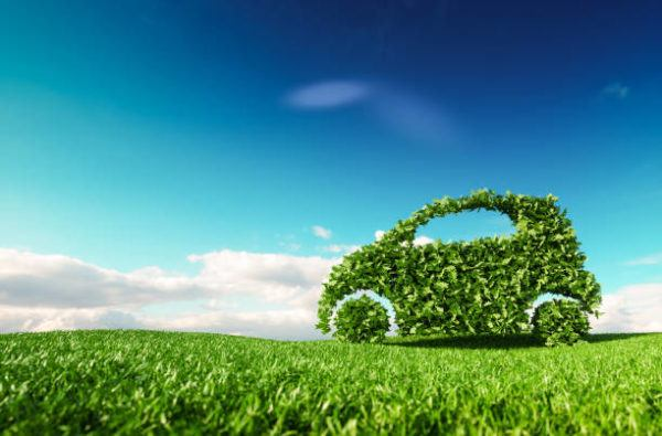 Dia mundial de la ecologia que cuando se celebra y como podemos celebrarlo