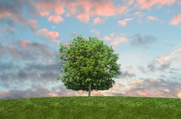 Día Mundial de la Ecología: qué es, cuándo se celebra y cómo podemos celebrarlo árbol