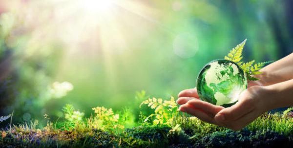 Dia mundial de la ecologia que es cuando se celebra y como podemos celebrarlo