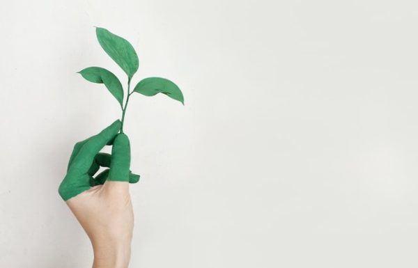 Día Mundial de la Ecología: qué es, cuándo se celebra y cómo podemos celebrarlo mano
