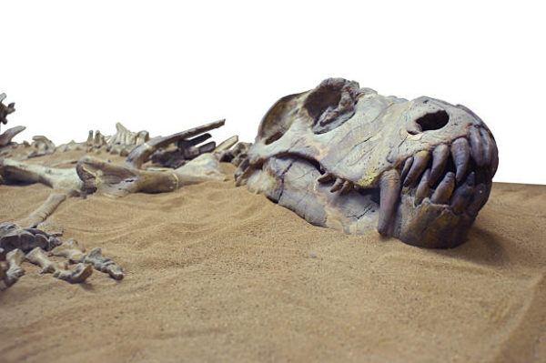 Dinosaurios que eran como eran que tipos habia y por que se extingueron