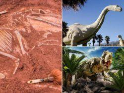 Dinosaurios: qué eran, cómo eran, qué tipos había y por qué se extinguieron
