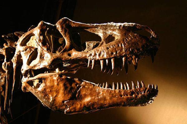 Dinosaurios que eran como eran tipos habia y por que se extingueron