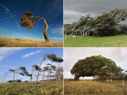 9 Fotos increíbles de paisajes arbolados moldeados por el viento