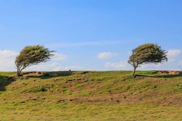 9 fotos increibles de paisajes arbolados moldeados por el viento cuckmere haven