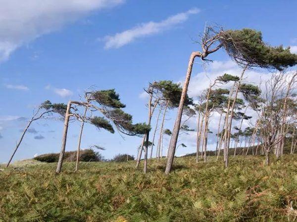 9 fotos increibles de paisajes arbolados moldeados por el viento darrs