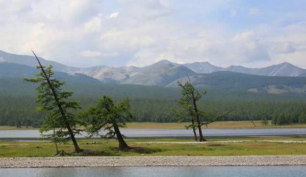 9 fotos increibles de paisajes arbolados moldeados por el viento lago hovsgol