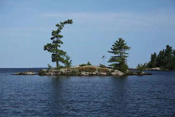 9 fotos increibles de paisajes arbolados moldeados por el viento lake nipissing