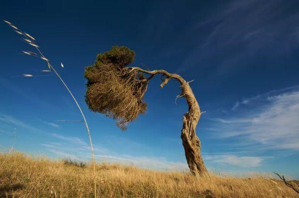 9 fotos increibles de paisajes arbolados moldeados por el viento nelson