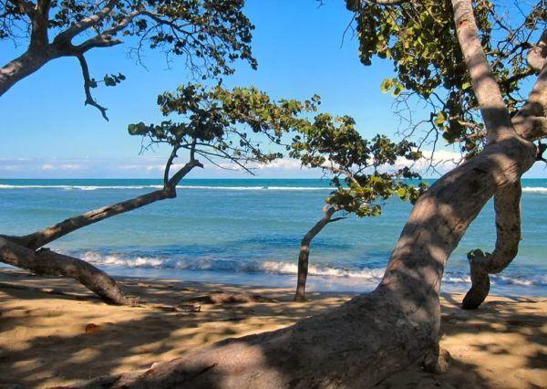 9 fotos increibles de paisajes arbolados moldeados por el viento puerto plata