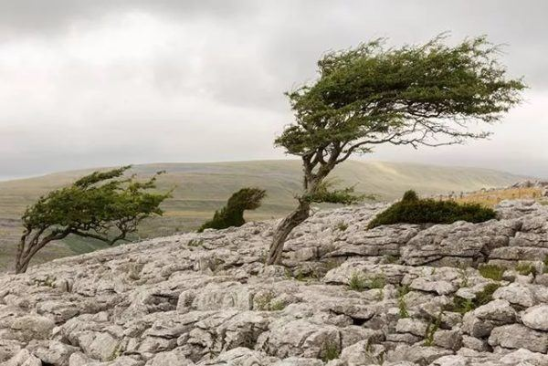 9 fotos increibles de paisajes arbolados moldeados por el viento twisleton scars