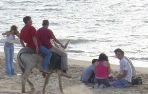 Maltrato animal en la Feria de la Manzanilla de Sanlúcar de Barrameda
