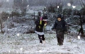 Ola de frío en Chile deja más de 140 millones en pérdidas y 85.000 animales muertos
