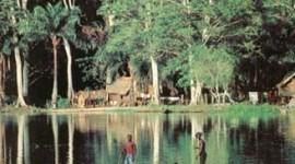 Seis nuevas especies en bosque virgen de El Congo