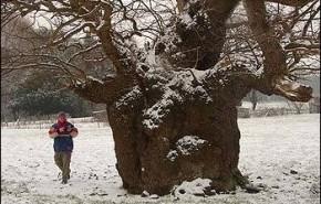 A la caza del árbol antiguo con mapas de hace 200 años