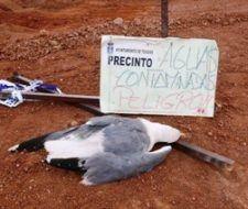 Aves muertas por aguas envenenadas en Lanzarote