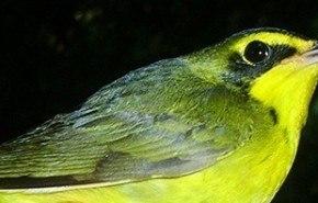 "Las aves migratorias comprenden otros ""lenguajes"""