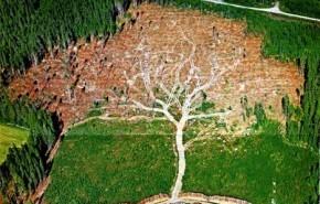 Una imagen que muestra el daño que se les hace a los bosques